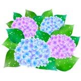 Hydrangea flowers rainy season flag Royalty Free Stock Image