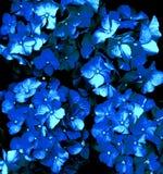 Hydrangea flowers. In summer garden Royalty Free Stock Photos