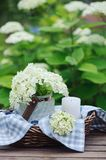 Hydrangea flowers in vintage jar with candle and blue tablecloth in summer garden Royalty Free Stock Image