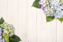 Hydrangea flowers on white wooden background. Top view with copy space. royalty free stock photo