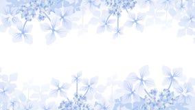 Hydrangea Frame. Blooming Hydrangea Frame Stock Image