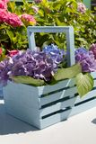 Hydrangea garden detail Stock Images