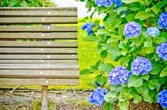 Hydrangea garden Stock Image