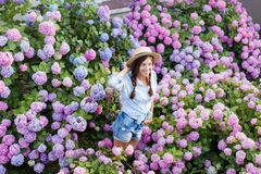 Hydrangea garden. Girl is smiling in hortensia bushes. Flowers are pink, blue, lilac and blooming in town streets. Young woman is wearing in denim shorts stock image