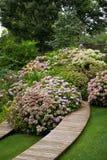 Hydrangea in a garden Stock Image