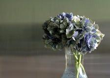 Hydrangea green. Blue hydrangea against pastel background Stock Photos