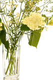 Hydrangea hortensia Stock Afbeelding