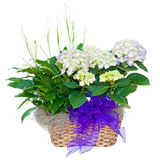 Hydrangea hortensia en het bloemstuk van de vredeslelie Royalty-vrije Stock Fotografie
