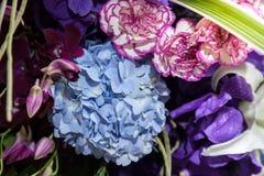 Hydrangea hortensia met roze en purpere orchidee Royalty-vrije Stock Afbeelding