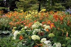 Hydrangea hortensia's & Daylilies Stock Foto