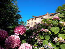 Hydrangea hortensia's en historisch landbouwbedrijf Royalty-vrije Stock Fotografie
