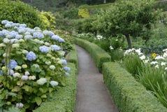 Hydrangea hortensia's, Tuin Inverewe stock afbeeldingen