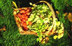 Hydrangea (Hortensia) und Physalis im Korb Stockbilder