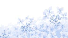 Hydrangea hortensiaachtergrond Royalty-vrije Stock Foto's