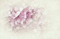 Hydrangea hortensiatextuur Stock Foto's