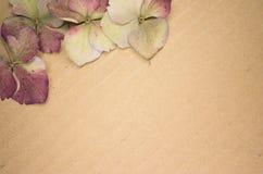 Hydrangea hortensis petals Stock Photo
