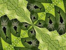 Hydrangea Kaleidoscope Royalty Free Stock Photography
