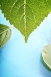 Hydrangea leaves on water Stock Photo