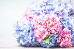 Hydrangea macro Stock Photography