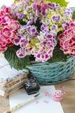 Hydrangea macrophylla (hortensia flower) Royalty Free Stock Images