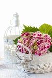 Hydrangea macrophylla (hortensia flower) Royalty Free Stock Photography