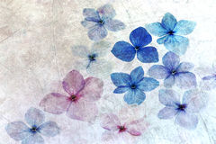 Hydrangea petals with texture overlay Royalty Free Stock Image