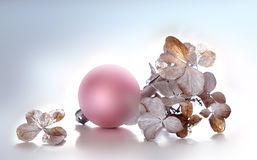Hydrangea and pink Christmas sphere. On white background Stock Photography