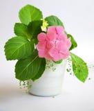 Hydrangea rose photographie stock libre de droits
