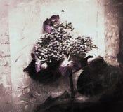 Hydrangea on script grunge Stock Photos
