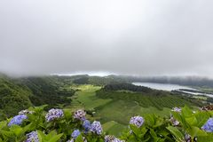 Hydrangea and Seca Caldera. Blue and purple and hyndrangeas with the Seca caldera and Lagoa Azul in the distance on Sao Miguel royalty free stock photos
