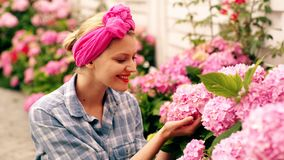 Hydrangea. Spring and summer. Flower care and watering. Soils and fertilizers. Greenhouse flowers. Woman care of flowers stock video footage
