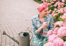 Hydrangea. Spring and summer. happy woman gardener with flowers. Flower care and watering. soils and fertilizers. woman royalty free stock photos
