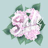 Hydrangea with Summer sale lettering Royalty Free Stock Image