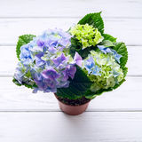 Hydrangea on table Royalty Free Stock Images