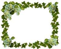 Hydrangea- und Efeurand Lizenzfreie Stockbilder