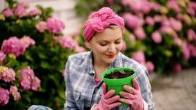 hydrangea Vår och sommar lycklig kvinnaträdgårdsmästare med blommor Omsorg och bevattna för blomma jorder och gödningsmedel Kvinn arkivfilmer
