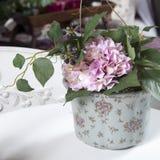Hydrangea in vase Stock Images