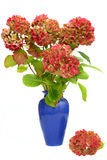 Hydrangea in vase Stock Photo
