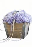Hydrangea in the vase Royalty Free Stock Image