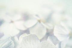 Hydrangeas στο χειμερινό ύφος στη σύσταση εγγράφου μουριών Στοκ Εικόνες