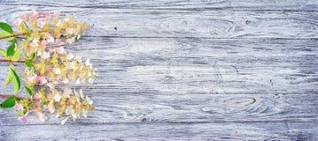hydrangeas Fotos de Stock