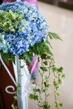 Hydrangeas azuis Fotografia de Stock Royalty Free
