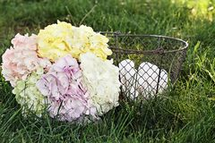 Hydrangeas and Country Eggs Stock Photo