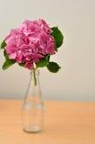 Hydrangeas Royalty Free Stock Images
