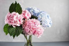 Hydrangeas in a glass vase. Hydrangeas produce larger mopheads made up of clusters of small flowers from Summer through. Autumn stock photo