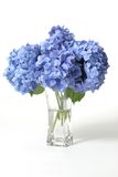 Hydrangeas In Vase Royalty Free Stock Photography