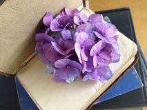 Hydrangeas on an old book Royalty Free Stock Images
