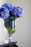 Hydrangeas in vase Royalty Free Stock Photo