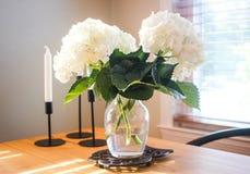 Hydrangeas in vaso Immagini Stock