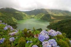 Hydrangeas on the volcano Stock Photography